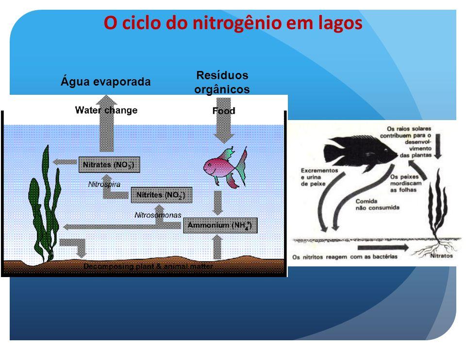 O ciclo do nitrogênio em lagos Água evaporada Resíduos orgânicos