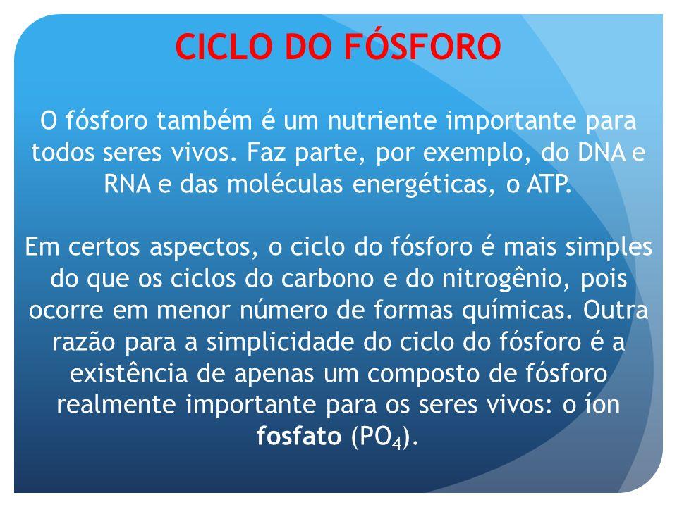 CICLO DO FÓSFORO O fósforo também é um nutriente importante para todos seres vivos. Faz parte, por exemplo, do DNA e RNA e das moléculas energéticas,