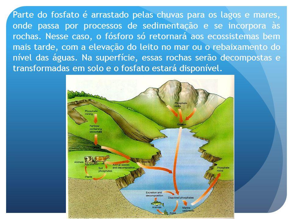 Parte do fosfato é arrastado pelas chuvas para os lagos e mares, onde passa por processos de sedimentação e se incorpora às rochas. Nesse caso, o fósf