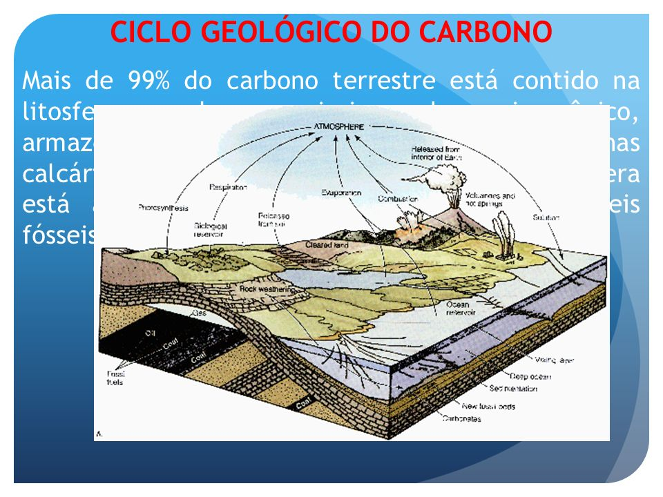 CICLO GEOLÓGICO DO CARBONO Mais de 99% do carbono terrestre está contido na litosfera, sendo a maioria carbono inorgânico, armazenado em rochas sedime