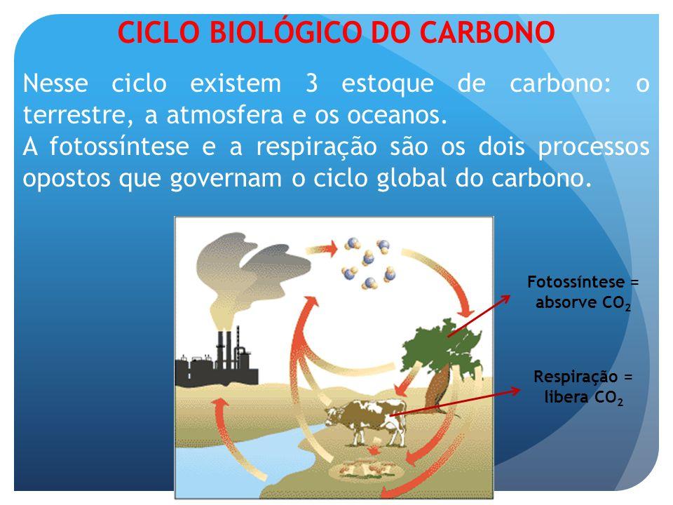 A fotossíntese e a respiração são os dois processos opostos que governam o ciclo global do carbono. Nesse ciclo existem 3 estoque de carbono: o terres