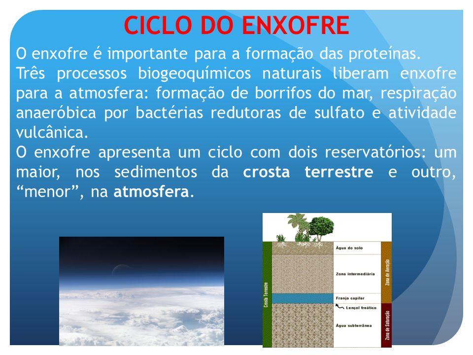CICLO DO ENXOFRE O enxofre é importante para a formação das proteínas. Três processos biogeoquímicos naturais liberam enxofre para a atmosfera: formaç