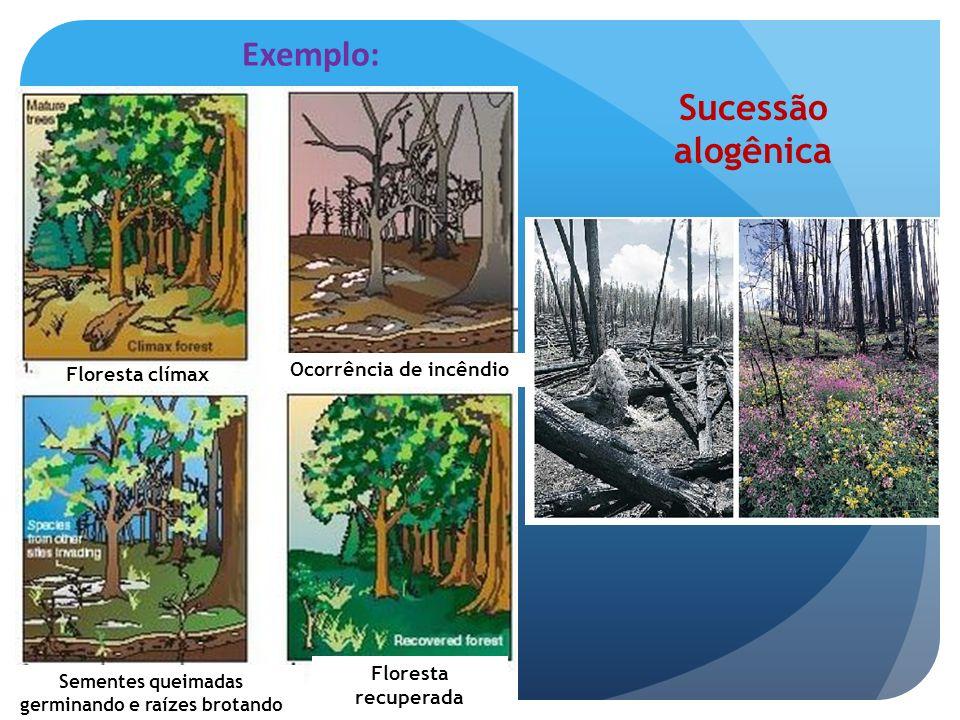 Classificação dos processos Sucessionais -Quanto à natureza do substrato na origem do processo: Sucessão primária: em substratos não previamente ocupados por organismos.