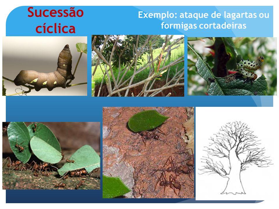 A sucessão é um processo de desenvolvimento do ecossistema e não apenas a simples substituição de espécies; Assim como ocorre uma seqüência de processos de desenvolvimento nos indivíduos ocorre também nos ecossistemas.