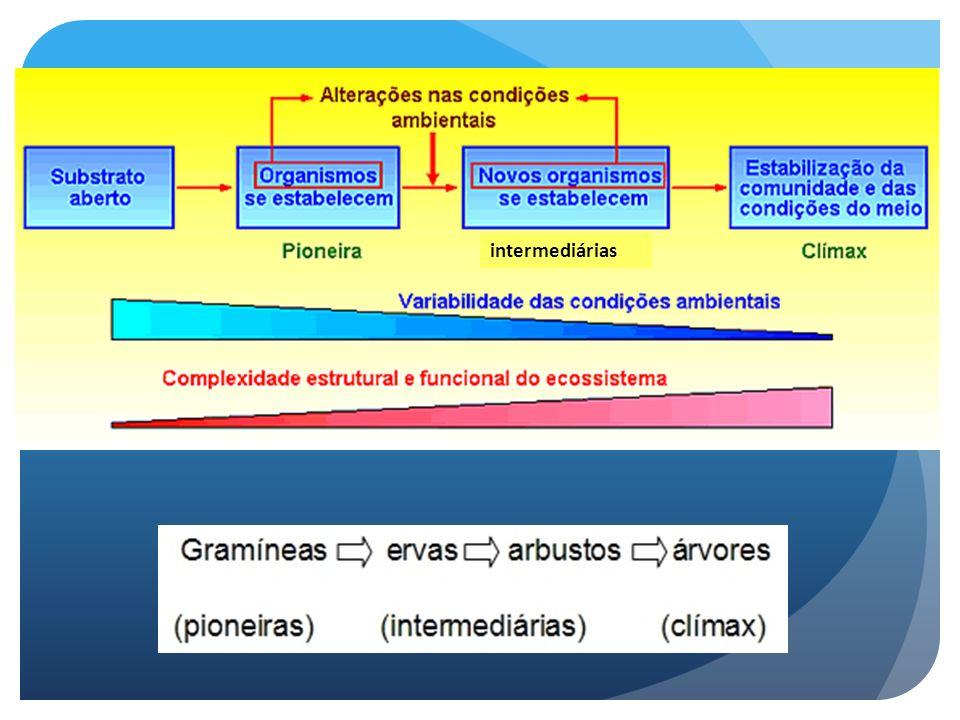 Classificação dos processos sucessionais -Quanto às forças que direcionam o processo: Sucessão autogênica (autogerada): mudanças ocasionadas por processos biológicos internos ao sistema – resultante de mudanças pelos próprios organismos.