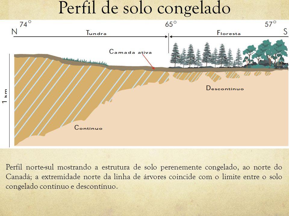 Perfil de solo congelado Perfil norte-sul mostrando a estrutura de solo perenemente congelado, ao norte do Canadá; a extremidade norte da linha de árv