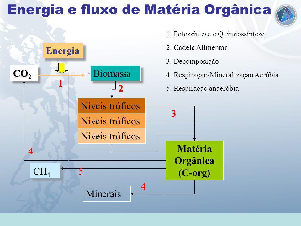 Universidade Federal do Esp Santo - UFES Energia e fluxo de Matéria Orgânica CO 2 Biomassa Níveis tróficos Matéria Orgânica (C-org) Minerais Energia 1