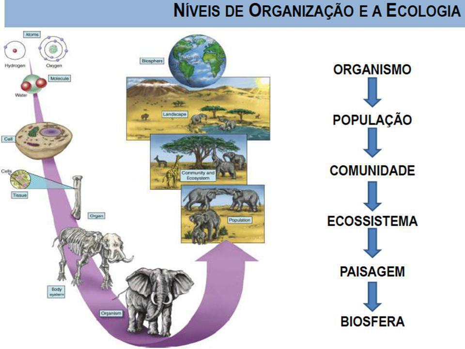 Universidade Federal do Esp Santo - UFES Características de um Ecossistema.