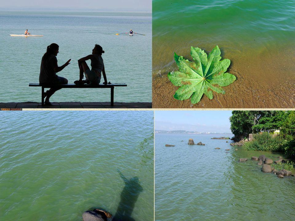 Qualidade x Uso da Água A água é um elemento vital para as atividades humanas e para a manutenção da vida.