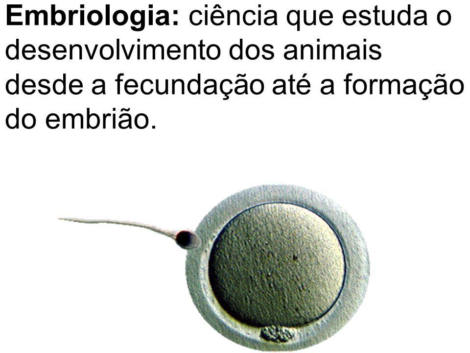 Embriologia: ciência que estuda o desenvolvimento dos animais desde a fecundação até a formação do embrião.