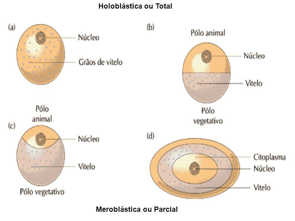 Holoblástica ou Total Meroblástica ou Parcial
