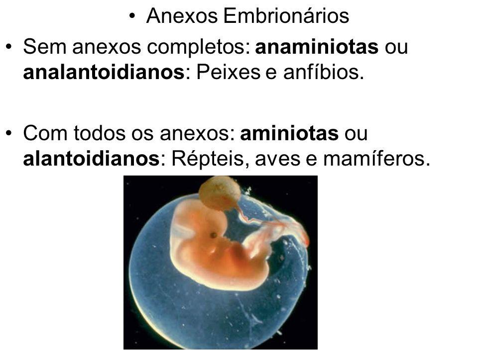 Anexos Embrionários Sem anexos completos: anaminiotas ou analantoidianos: Peixes e anfíbios. Com todos os anexos: aminiotas ou alantoidianos: Répteis,