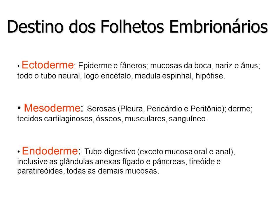 Destino dos Folhetos Embrionários Ectoderme : Epiderme e fâneros; mucosas da boca, nariz e ânus; todo o tubo neural, logo encéfalo, medula espinhal, h