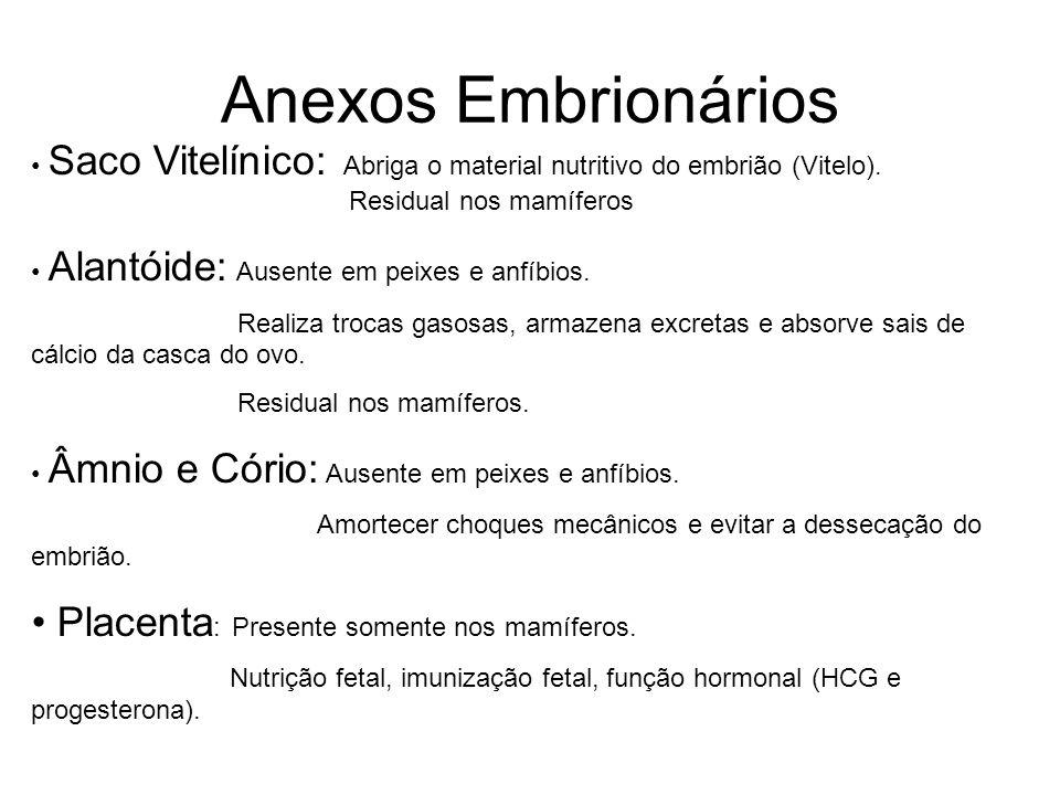 Anexos Embrionários Saco Vitelínico: Abriga o material nutritivo do embrião (Vitelo). Residual nos mamíferos Alantóide: Ausente em peixes e anfíbios.