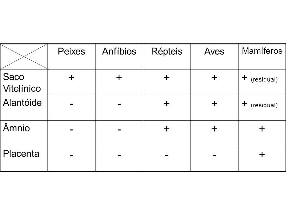 PeixesAnfíbiosRépteisAves Mamíferos Saco Vitelínico +++++ (residual) Alantóide --+++ (residual) Âmnio --+++ Placenta ----+