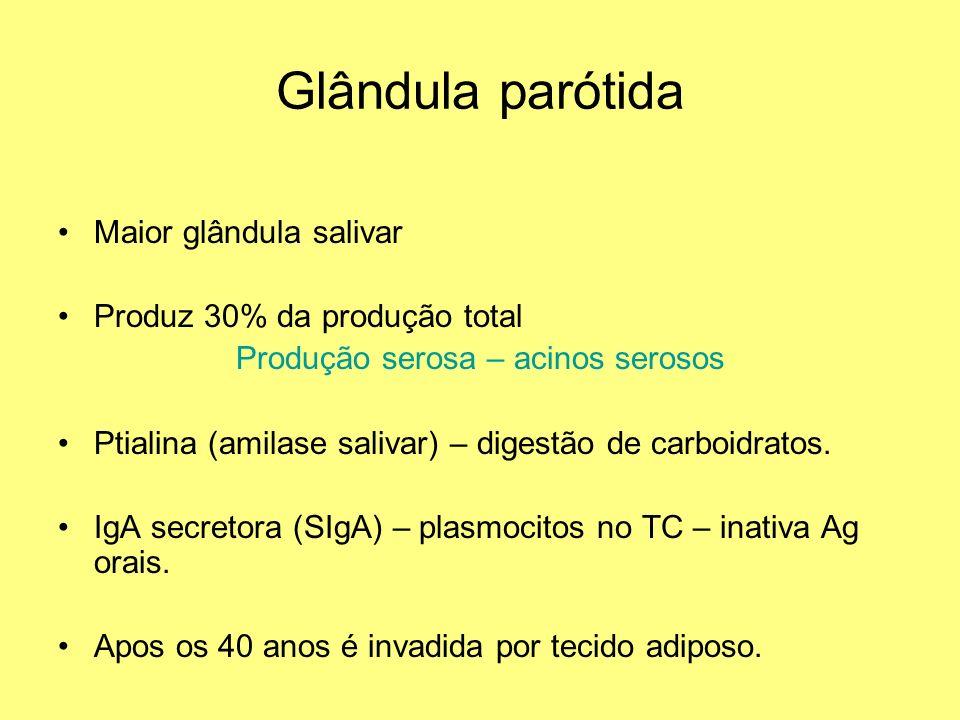 Glândula parótida Maior glândula salivar Produz 30% da produção total Produção serosa – acinos serosos Ptialina (amilase salivar) – digestão de carboi