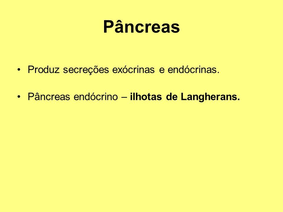Pâncreas Produz secreções exócrinas e endócrinas. Pâncreas endócrino – ilhotas de Langherans.