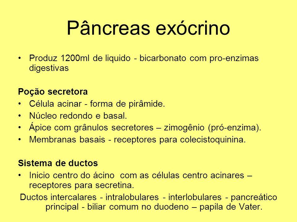 Pâncreas exócrino Produz 1200ml de liquido - bicarbonato com pro-enzimas digestivas Poção secretora Célula acinar - forma de pirâmide. Núcleo redondo