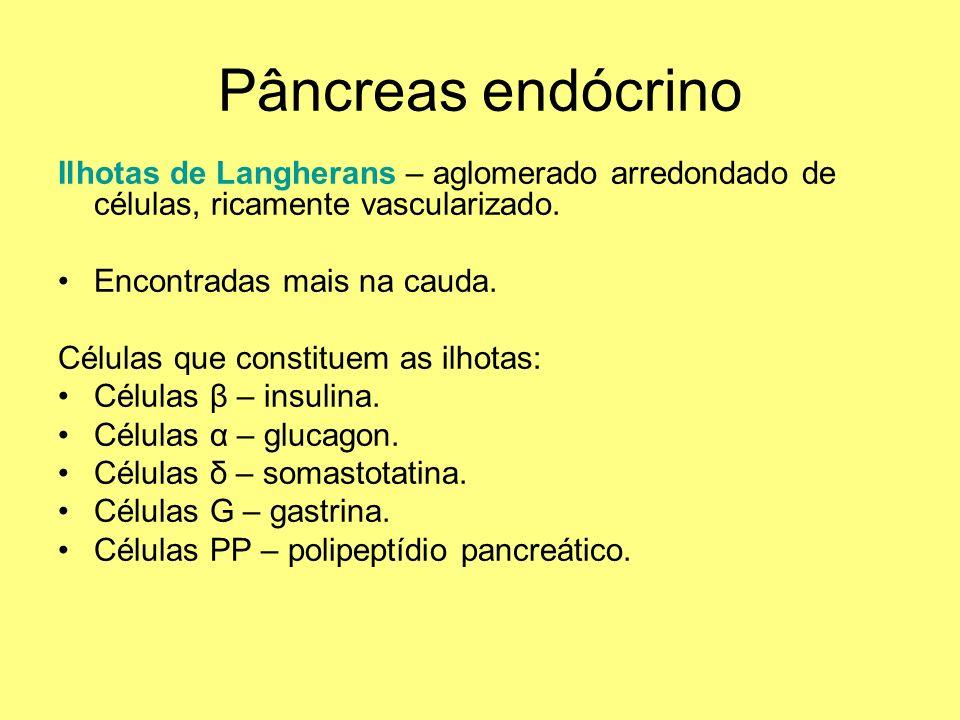 Pâncreas endócrino Ilhotas de Langherans – aglomerado arredondado de células, ricamente vascularizado. Encontradas mais na cauda. Células que constitu