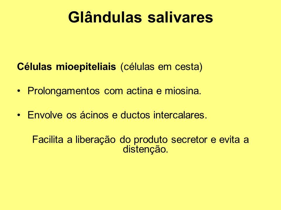 Glândulas salivares Células mioepiteliais (células em cesta) Prolongamentos com actina e miosina. Envolve os ácinos e ductos intercalares. Facilita a