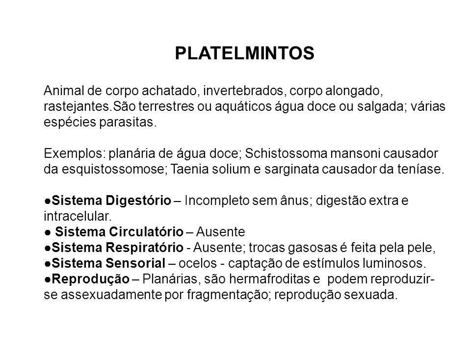 Ciclo de vida da Tênia sólium