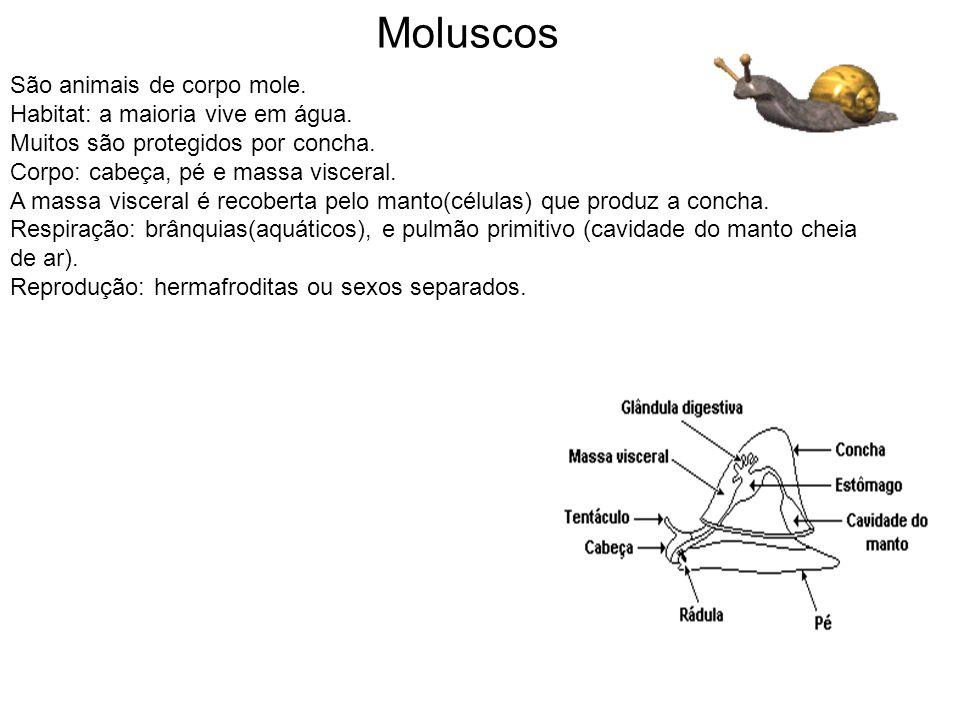 São animais de corpo mole. Habitat: a maioria vive em água. Muitos são protegidos por concha. Corpo: cabeça, pé e massa visceral. A massa visceral é r
