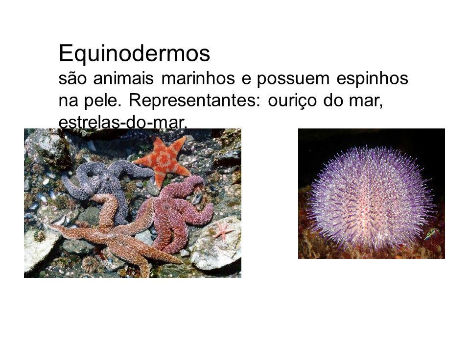 Equinodermos são animais marinhos e possuem espinhos na pele. Representantes: ouriço do mar, estrelas-do-mar.