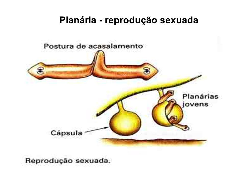 Doença provocada pelo esquistossomo é a esquistossomose ou barriga-dágua