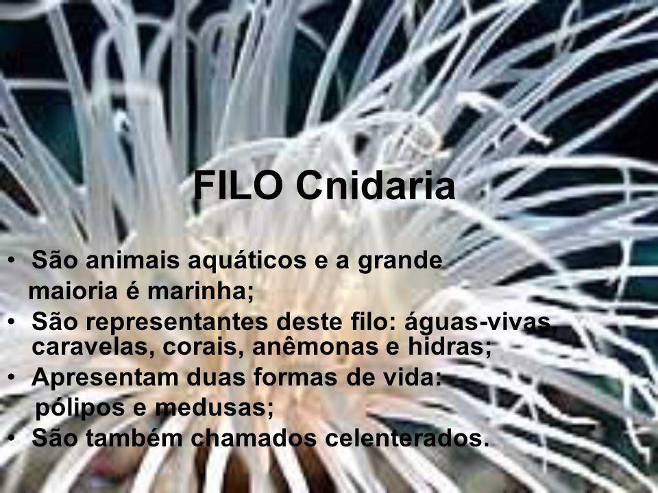 FILO Cnidaria São animais aquáticos e a grande maioria é marinha; São representantes deste filo: águas-vivas, caravelas, corais, anêmonas e hidras; Ap