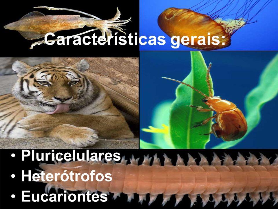 Características gerais: Pluricelulares Heterótrofos Eucariontes