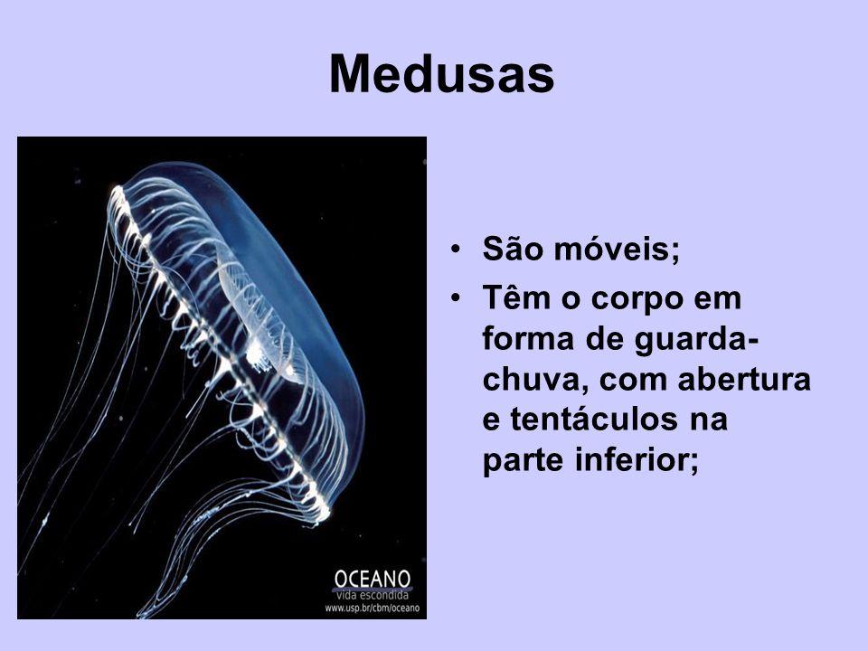 Medusas São móveis; Têm o corpo em forma de guarda- chuva, com abertura e tentáculos na parte inferior;
