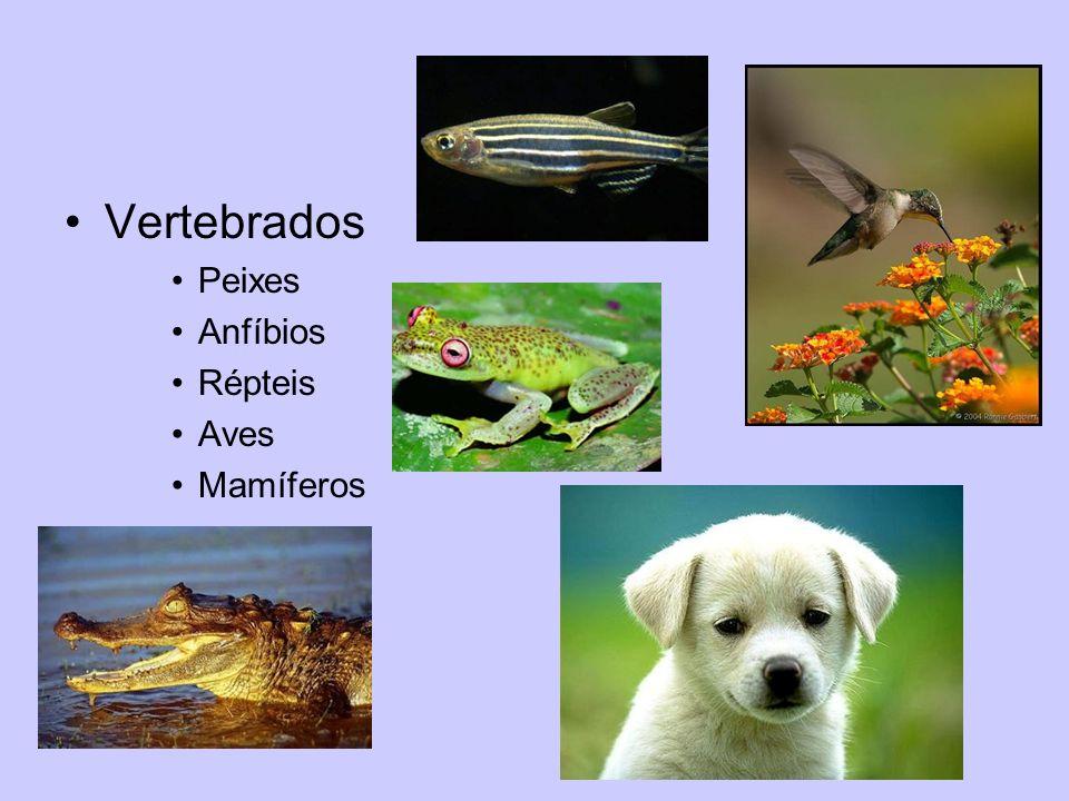 Vertebrados Peixes Anfíbios Répteis Aves Mamíferos