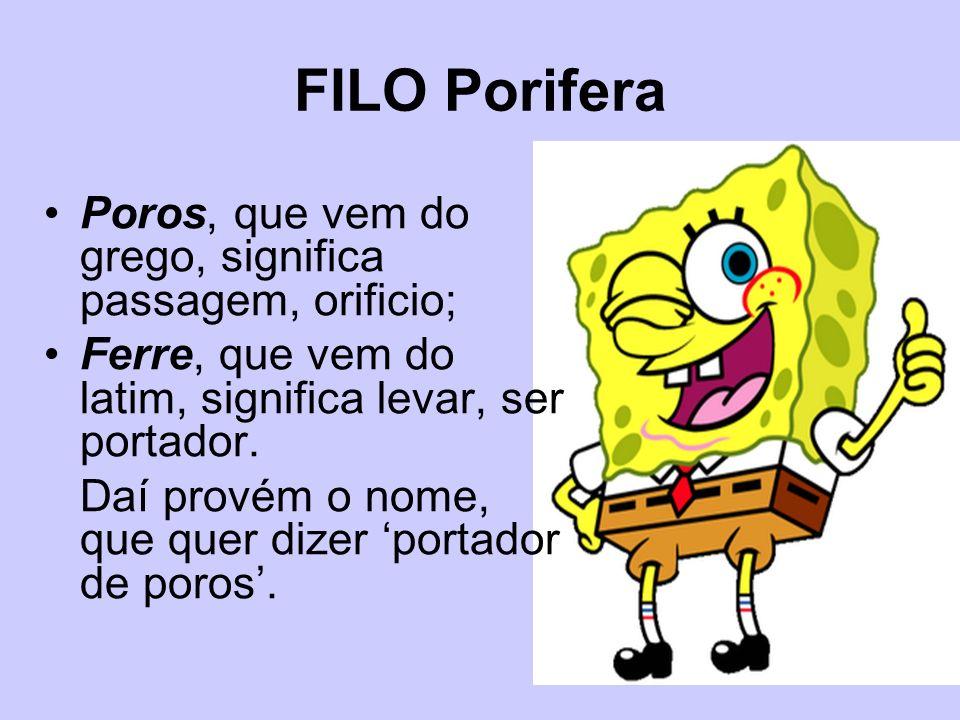 FILO Porifera Poros, que vem do grego, significa passagem, orificio; Ferre, que vem do latim, significa levar, ser portador. Daí provém o nome, que qu