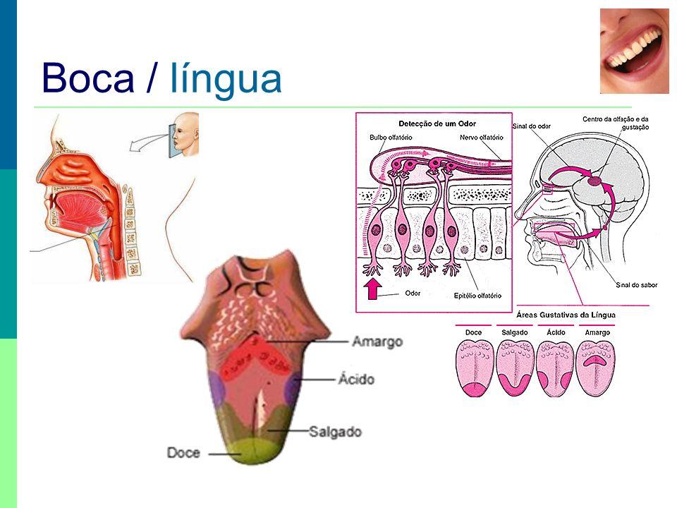 Boca / língua