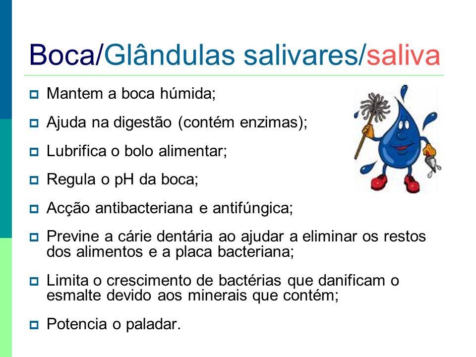 Boca/Glândulas salivares/saliva Mantem a boca húmida; Ajuda na digestão (contém enzimas); Lubrifica o bolo alimentar; Regula o pH da boca; Acção antib