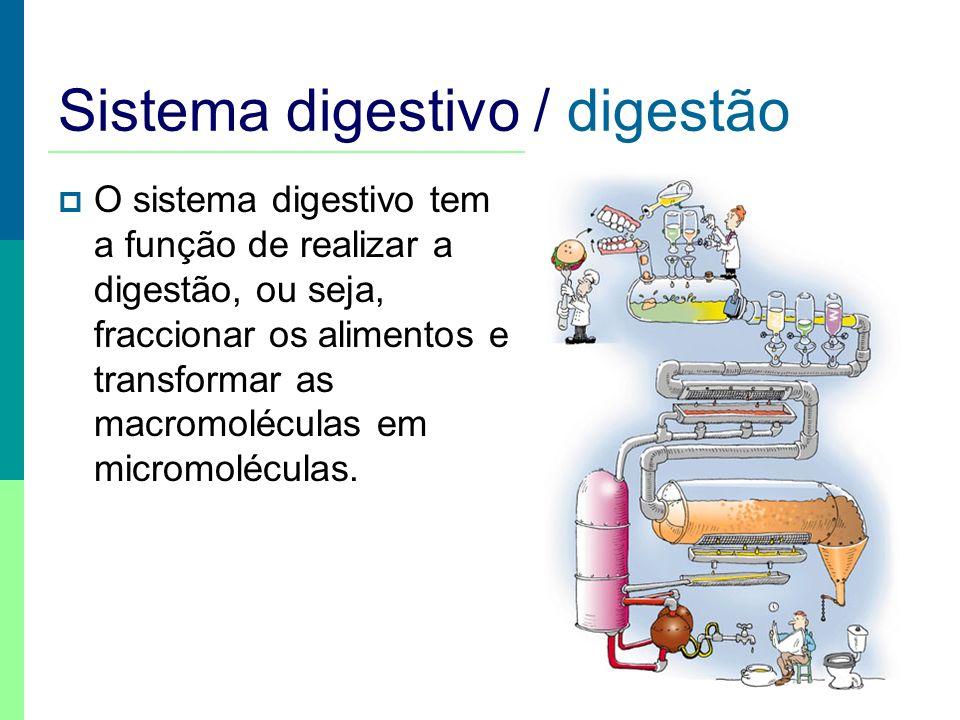 Sistema digestivo / digestão O sistema digestivo tem a função de realizar a digestão, ou seja, fraccionar os alimentos e transformar as macromoléculas