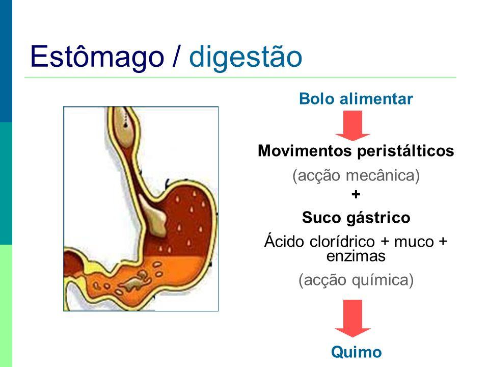 Estômago / digestão Bolo alimentar Movimentos peristálticos (acção mecânica) + Suco gástrico Ácido clorídrico + muco + enzimas (acção química) Quimo