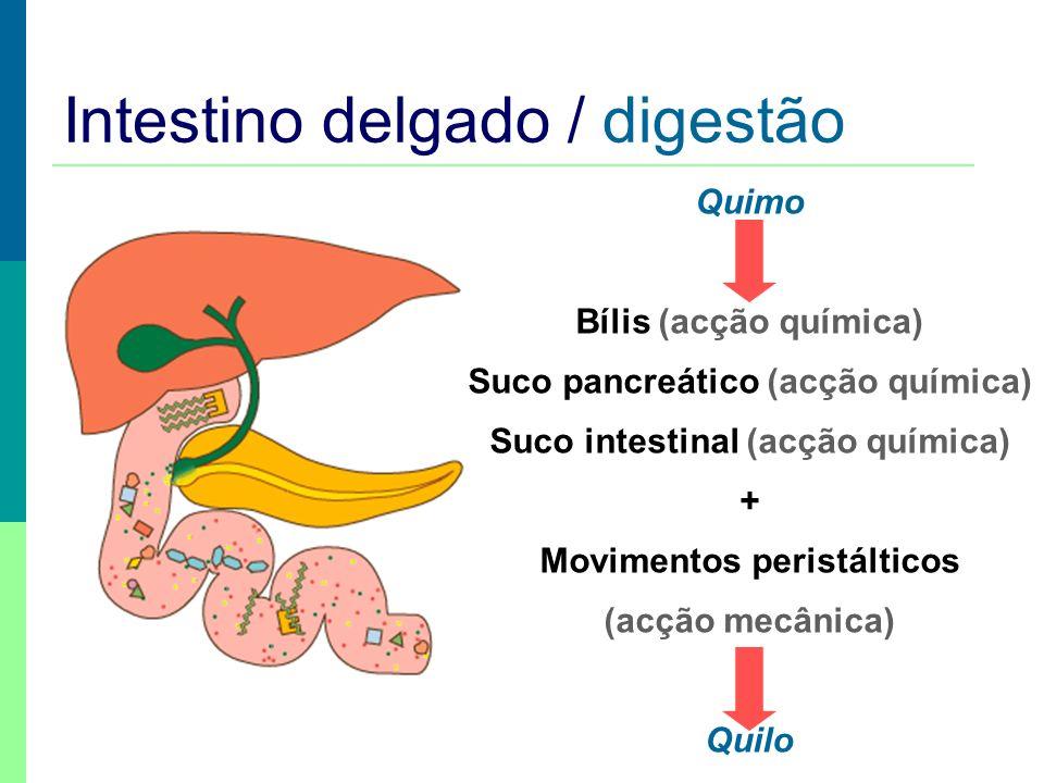 Intestino delgado / digestão Quimo Bílis (acção química) Suco pancreático (acção química) Suco intestinal (acção química) + Movimentos peristálticos (