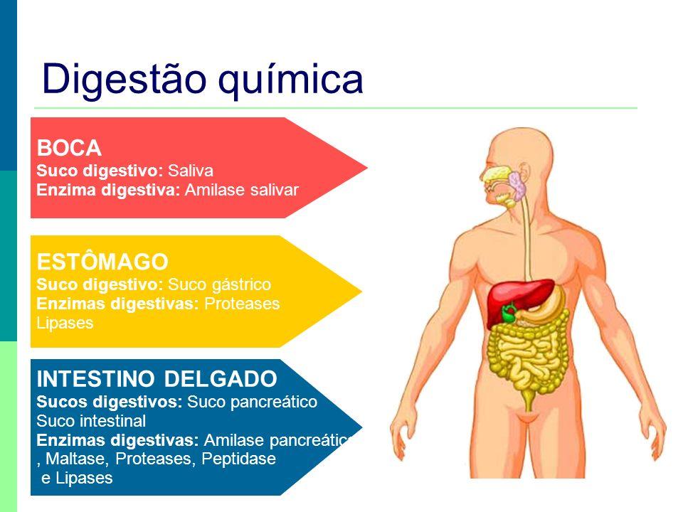 Prof. Teresa Condeixa 0809 Digestão química BOCA Suco digestivo: Saliva Enzima digestiva: Amilase salivar ESTÔMAGO Suco digestivo: Suco gástrico Enzim