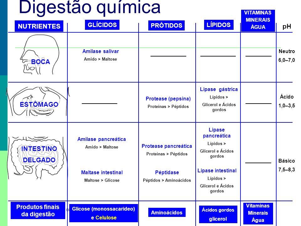 Prof. Teresa Condeixa 0809 Amilase salivar Amido > Maltose Amilase pancreática Amido > Maltose Maltase intestinal Maltose > Glicose NUTRIENTES BOCA ES