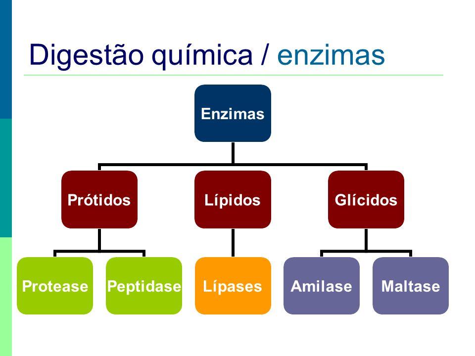 Digestão química / enzimas Enzimas Prótidos ProteasePeptidase Lípidos Lípases Glícidos AmilaseMaltase