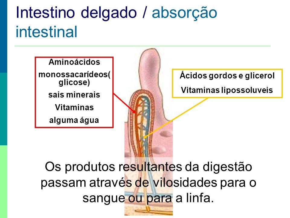 Absorção Intestinal Aminoácidos monossacarídeos( glicose) sais minerais Vitaminas alguma água Ácidos gordos e glicerol Vitaminas lipossoluveis Intesti