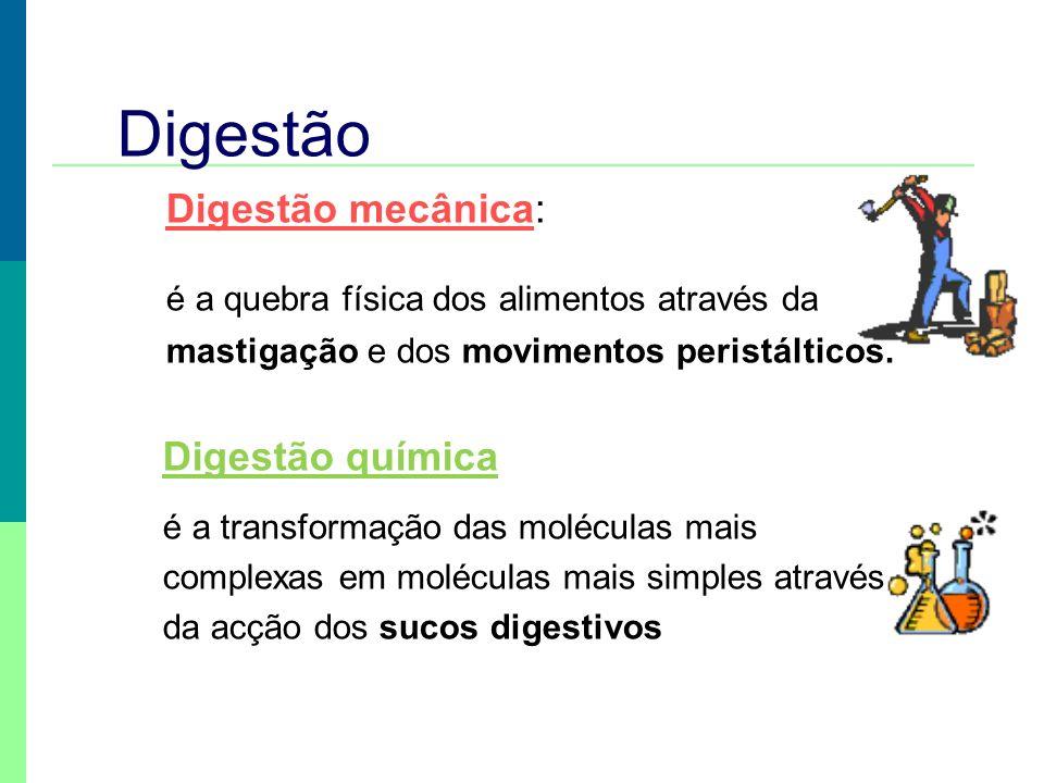 Digestão Digestão mecânica: é a quebra física dos alimentos através da mastigação e dos movimentos peristálticos. Digestão química é a transformação d
