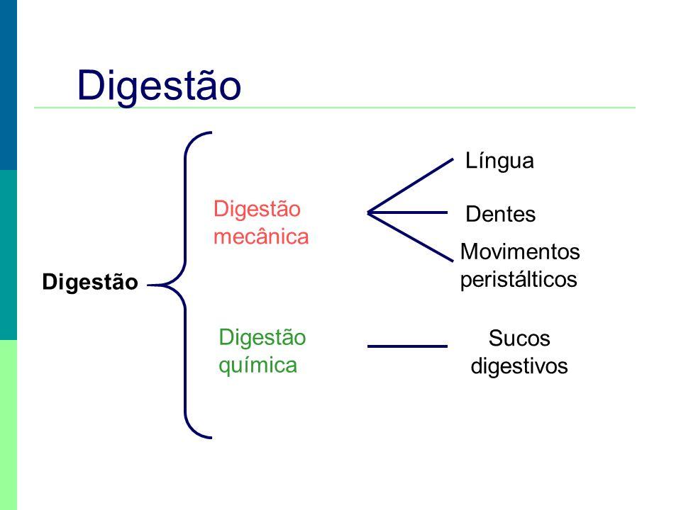 Digestão Digestão mecânica Digestão química Língua Dentes Movimentos peristálticos Sucos digestivos Digestão