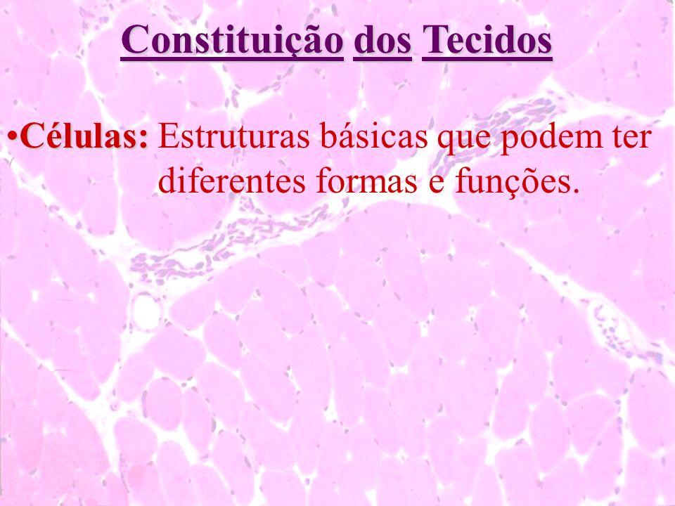 Constituição dos Tecidos Células:Células:Estruturas básicas que podem ter diferentes formas e funções.