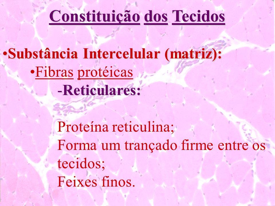 Constituição dos Tecidos Substância Intercelular (matriz):Substância Intercelular (matriz): Fibras protéicas -Reticulares: Proteína reticulina; Forma