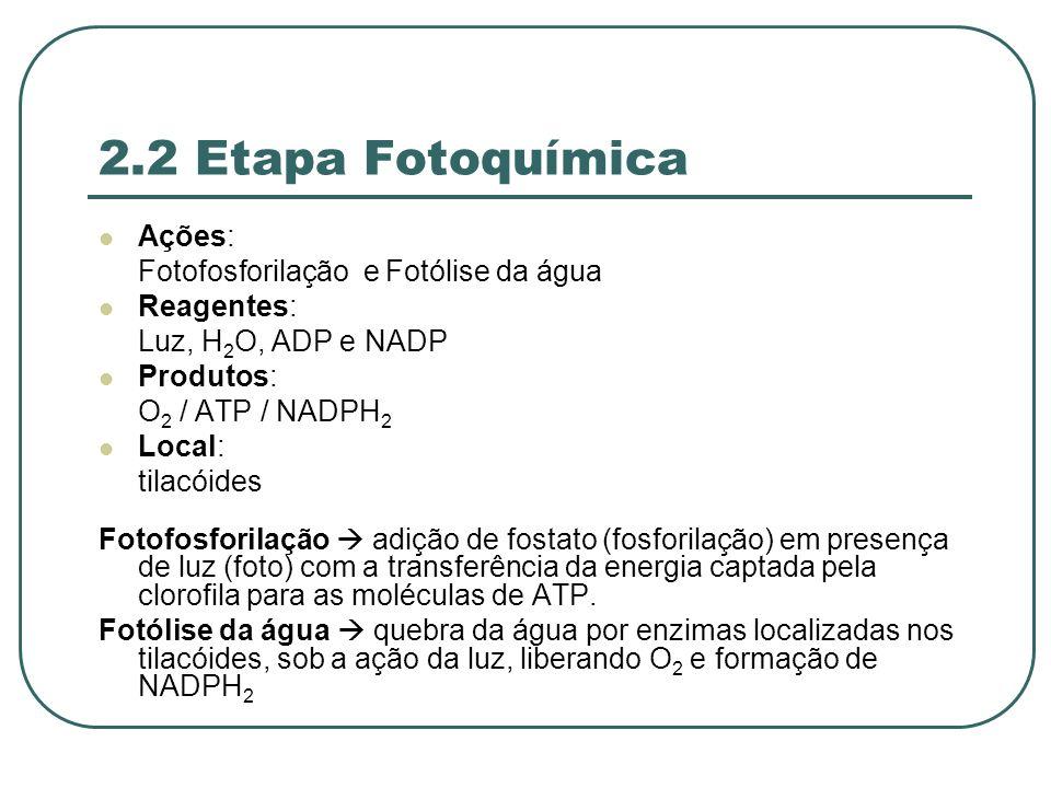 2.2 Etapa Fotoquímica Ações: Fotofosforilação e Fotólise da água Reagentes: Luz, H 2 O, ADP e NADP Produtos: O 2 / ATP / NADPH 2 Local: tilacóides Fotofosforilação adição de fostato (fosforilação) em presença de luz (foto) com a transferência da energia captada pela clorofila para as moléculas de ATP.