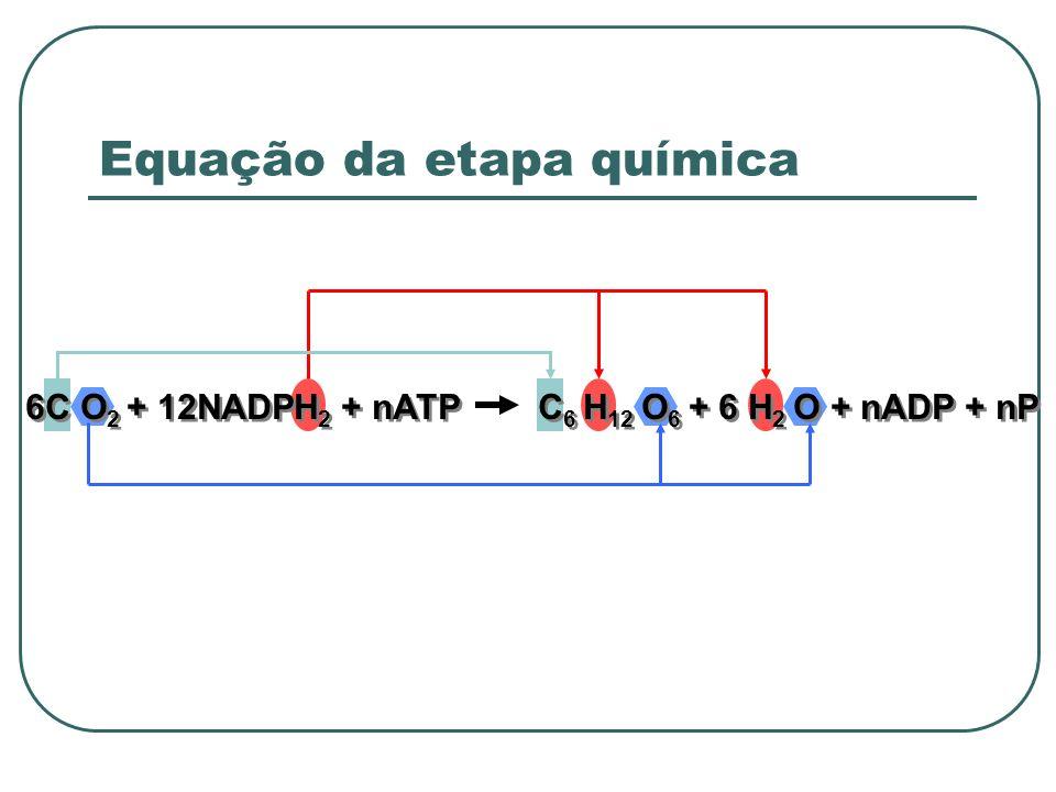 6C O 2 + 12NADPH 2 + nATP C 6 H 12 O 6 + 6 H 2 O + nADP + nP Equação da etapa química