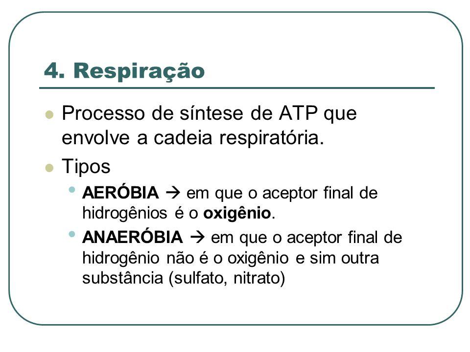 4.Respiração Processo de síntese de ATP que envolve a cadeia respiratória.