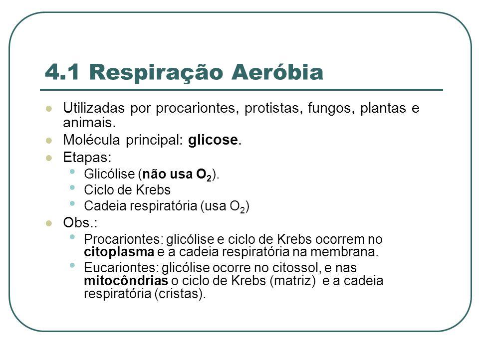 4.1 Respiração Aeróbia Utilizadas por procariontes, protistas, fungos, plantas e animais.